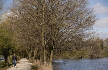 Alderley Park Lake walk