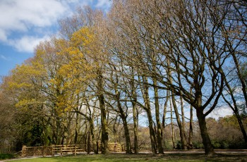 Alderley Park Forestry