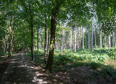 Alderley Park Woods